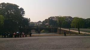 皇居さくら (1).jpg